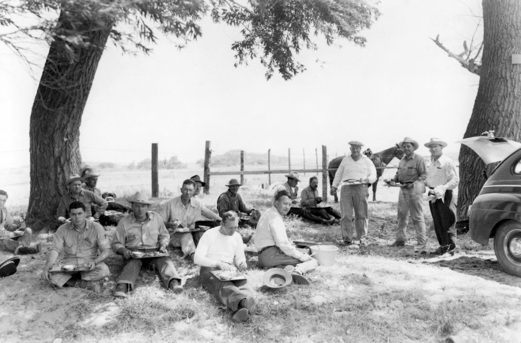Men sit under a tree and eat lunch near a pasture.
