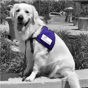 Dog with tongue hanging out wears a purple vest.