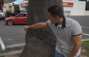 Man stands behind tree at gas station.