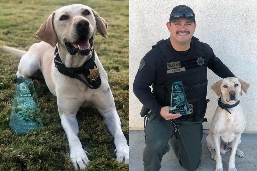 Dog wearing badge and his handle pose with a trophy.