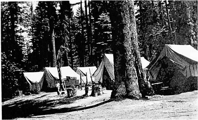 Canvas tents among large pine trees.