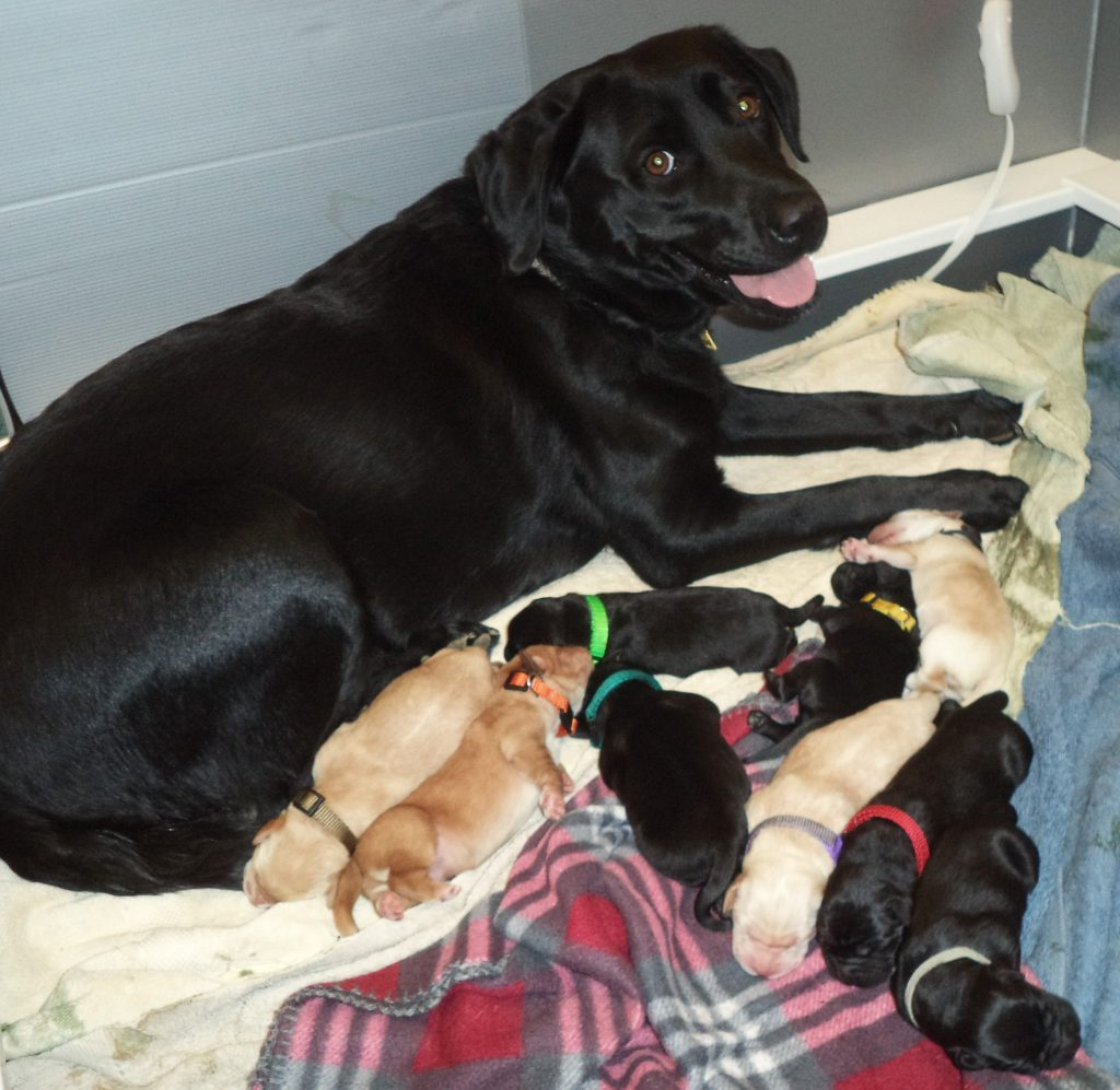 Dog snuggles with her newborn puppies at Richard J. Donovan Correctional Facility.