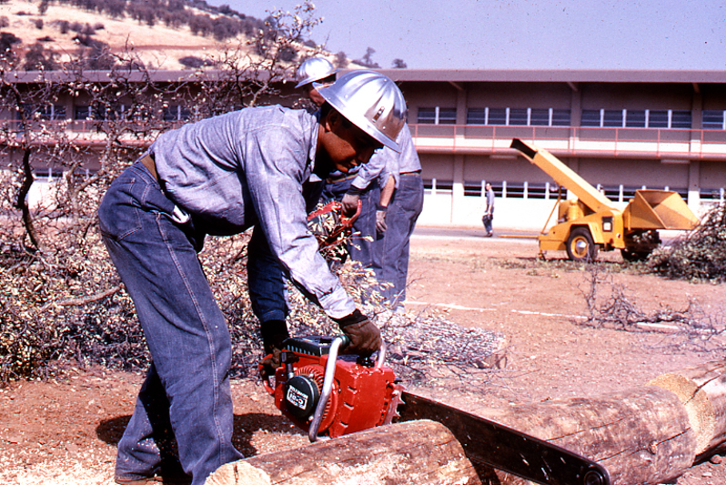 Man in blue jeans, a blue shirt and metal hard hat cuts a log using a chainsaw.