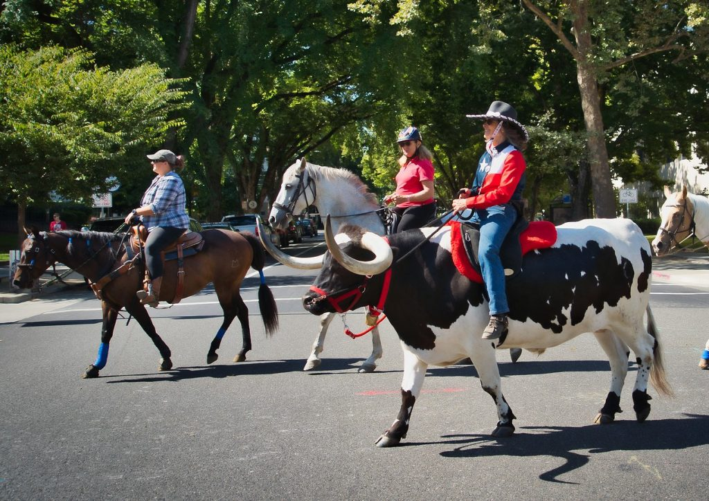 Woman rides a longhorn steer in a parade.