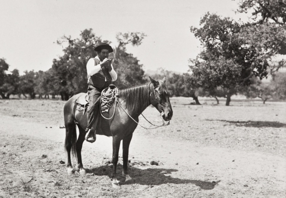 Man sits on a horse in a field of trees.