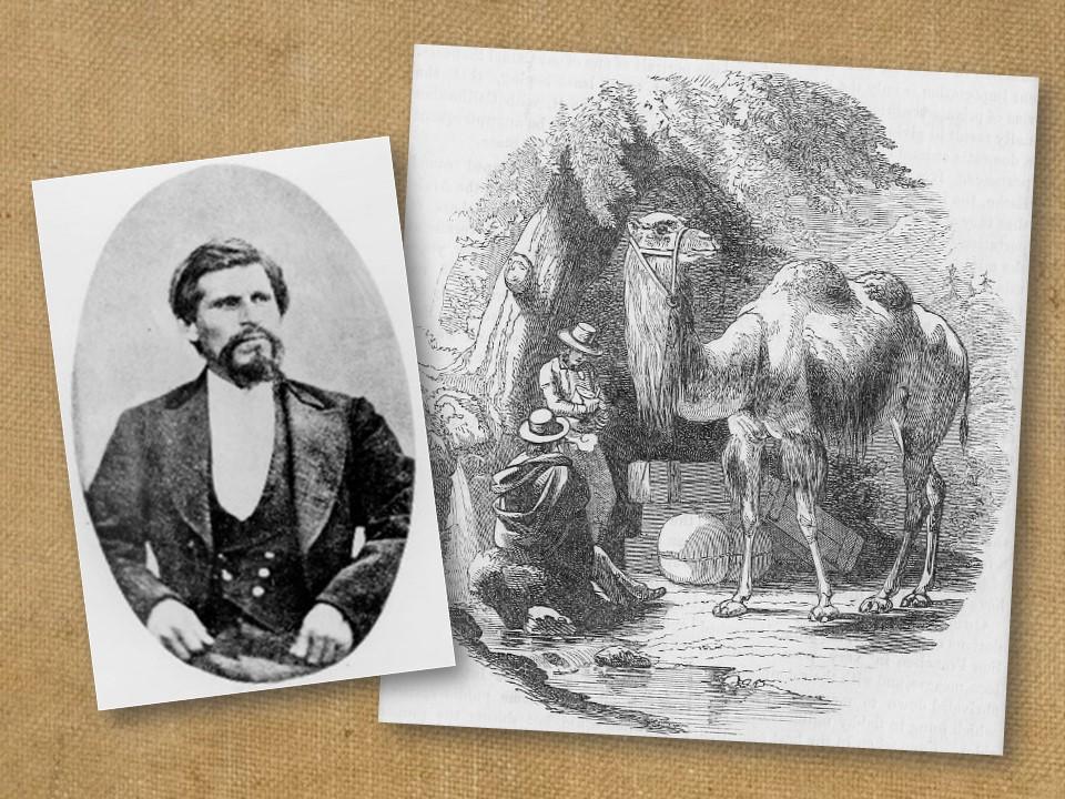 Bandit mughsot of Tiburcio Vasquez and camels.