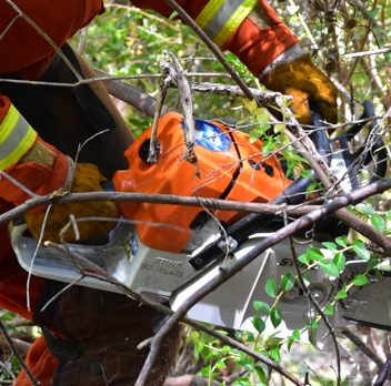 CDCR inmate crews cut brush using a chainsaw.
