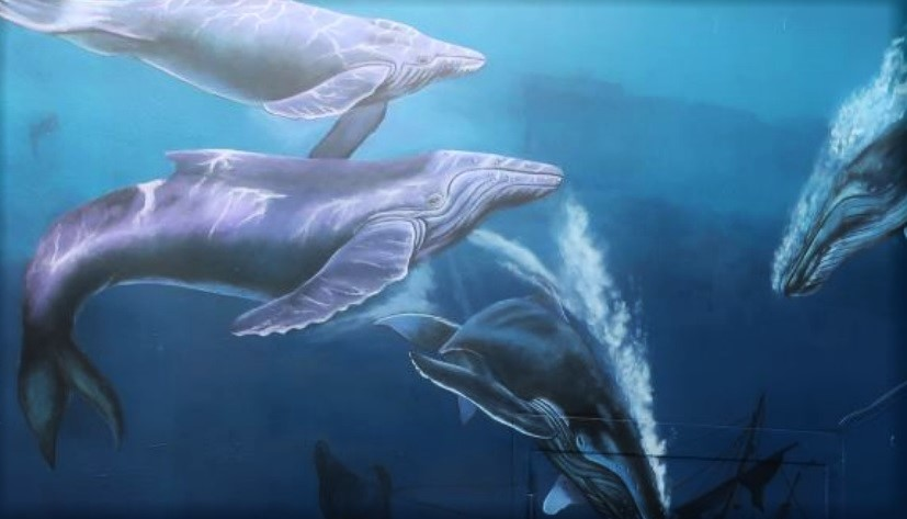Whales swim in an undersea environment in a painted mural.