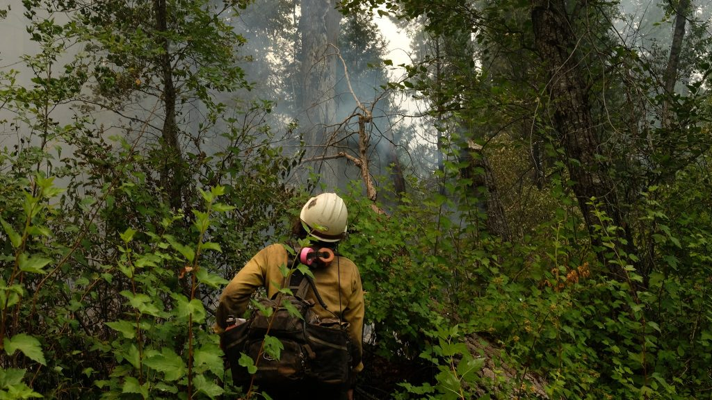 Firefighters walks through thick brush in a forest.