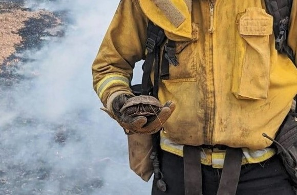 A firefighters holds a small turtle.