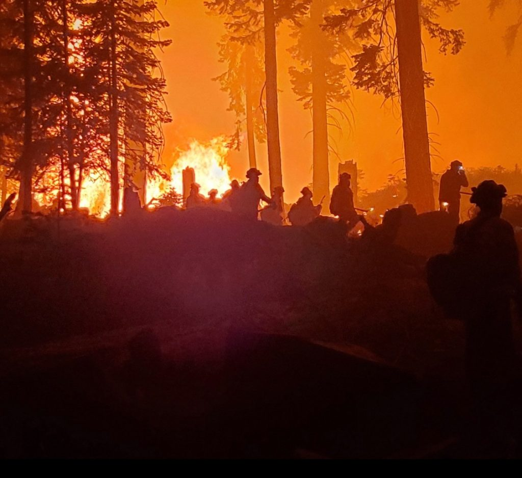 Silhouettes of Ventura Training Center firefighters against blazes in the trees.