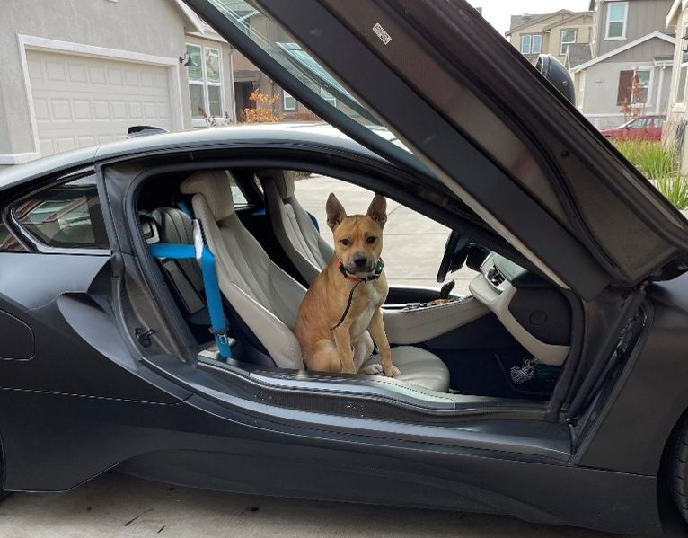 Dog sits in passenger seat of car.