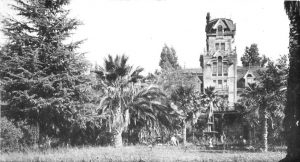 A castle like building surrounded by overgrown trees.