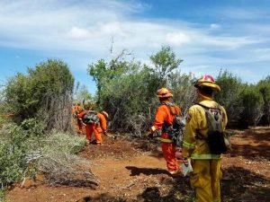 Fire crews cut a line through brush.