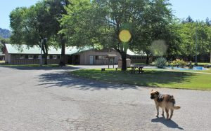 Dog stands in conservation camp compound.