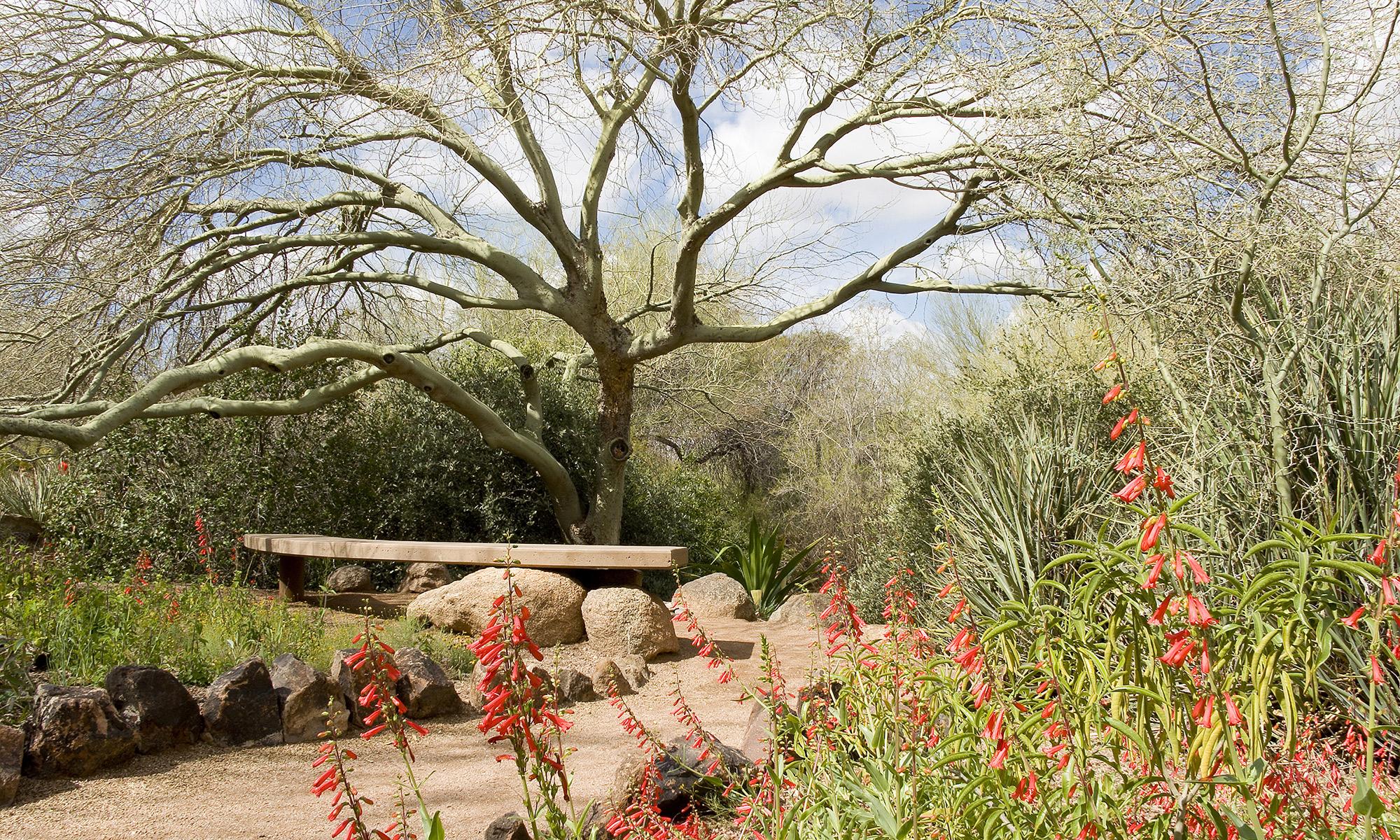 Picture of Desert Botanical Garden