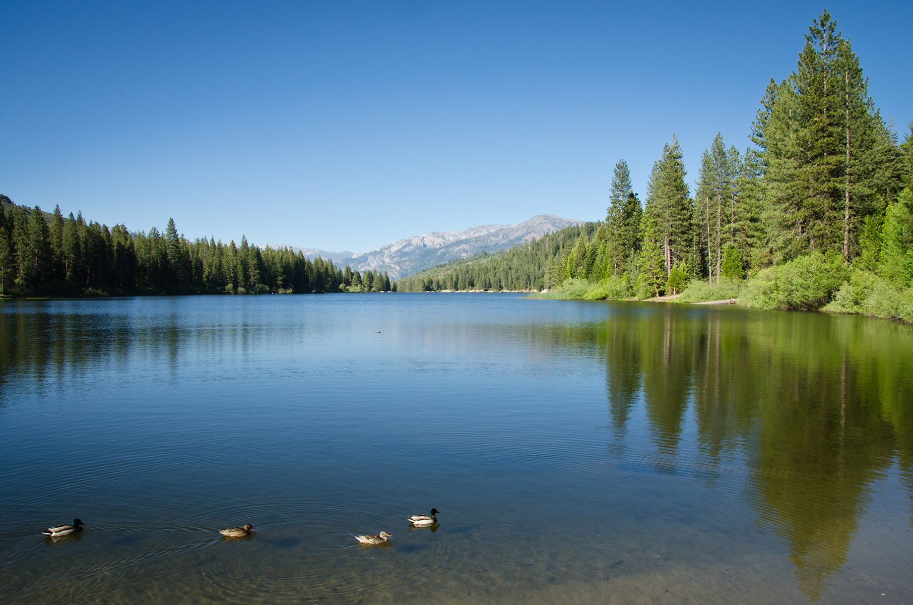 picture of Hume Lake