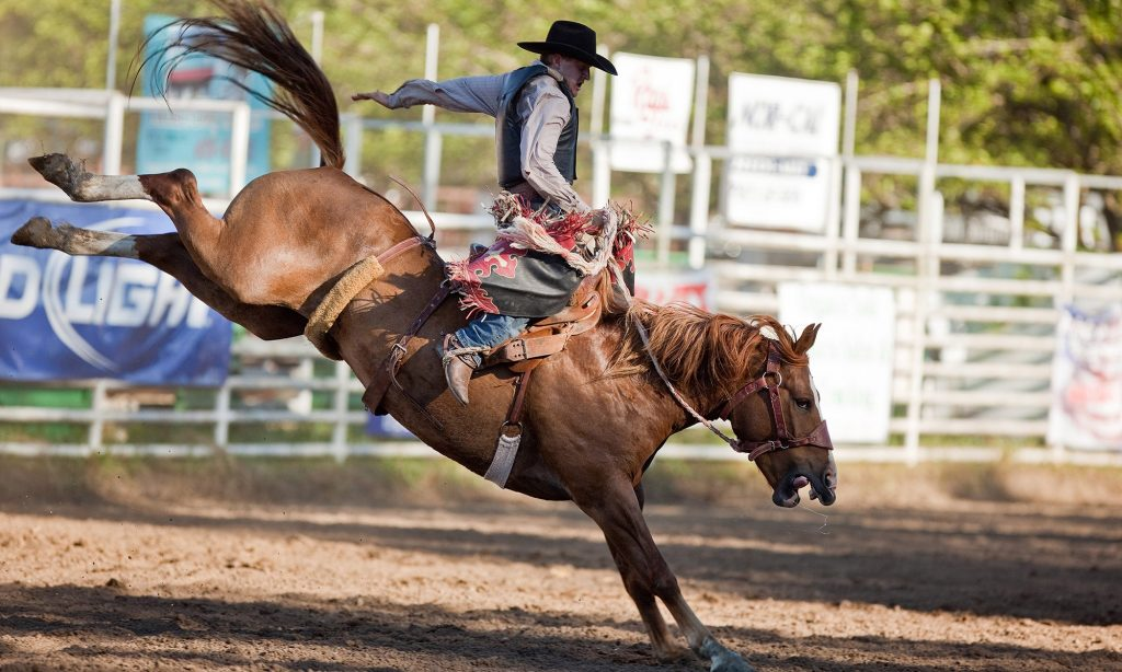 cowboy riding a bucking horse in rodeo