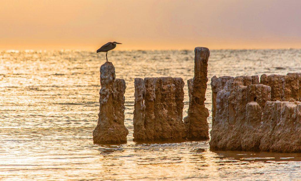 Salton Sea with stork
