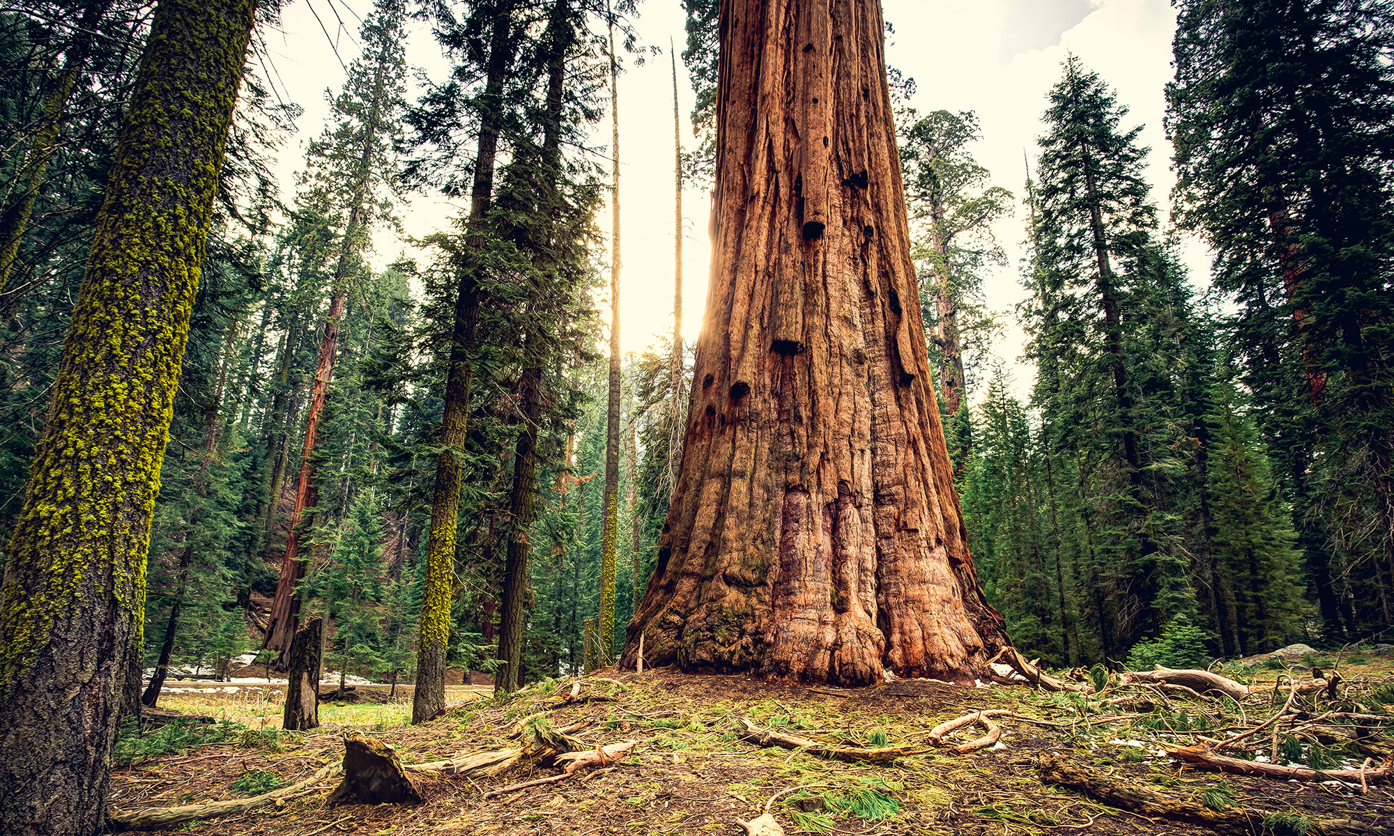 Picture of Sequoia National Park